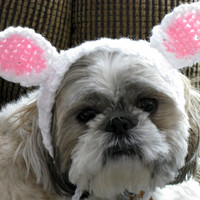Dog Hat with Bunny Ears