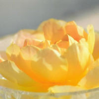 Yellow Rose in Crystal Bowl Blank Photo Note Card Floral Photography