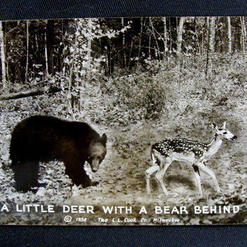 Vintage Humorous Postcard A Little Deer with a Bear Behind Wildlife Deer Bear Woods