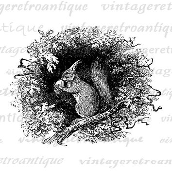 Printable Image Squirrel with Acorn Digital Download Illustration Graphic Vintage Clip Art for Transfers Printing etc HQ 300dpi No.2701
