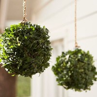 Live Ivy Kissing Ball