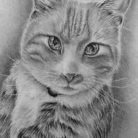 Personalized Pet Drawing, black and white, ONE PET, cat art, dog art, Personalized Gift, Original Pencil, Pet memorial, custom pet portrait