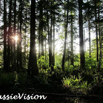 Forest Sunlight- Trees- Pacific Northwest- Washington- Evergreen State- Nature- Card- Craft- Desktop- 8x10- Digital File- Instant Download