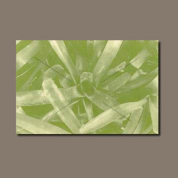 Anthotype Green Canvas Wall Art Print. Splash Anthotype Wall Decor Piece for your Prints Ideas.