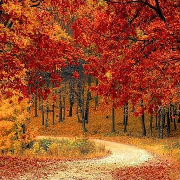 AUTUMN DRIVEWAY ORANGE LEAVES BACKGROUND PRINTED BACKDROP 5x6 - LCPC6792 - LAST CALL