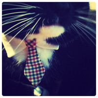 Classic Tie Cat Collar // Various Prints { 23 Color Options } | Chariots Afire |