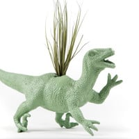 Mint Green Dinosaur planter with air plant GREAT GIFT for college, office, or desk decor