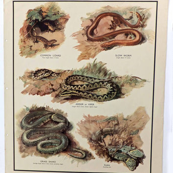 Lizards and Snakes, Vintage School Poster, Home Decor, Housewares, Wall Hanging, Macmillans Nature Class Pictures