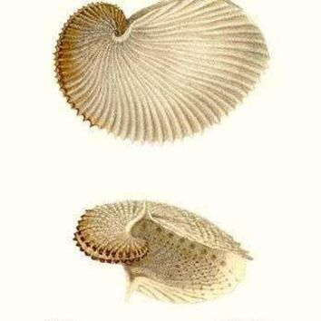 nautilus shell (Canvas Art)