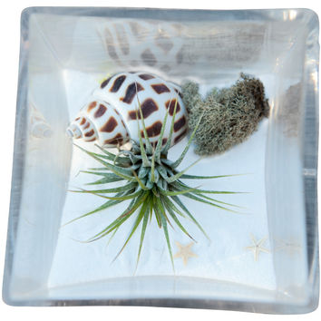 Beach White Airplant Terrarium