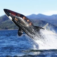 The Killer Whale Submarine.