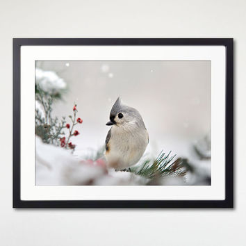 Winter Bird Print Art, Fine Art Photography, Nature Wall Decor, Bird Photo Print