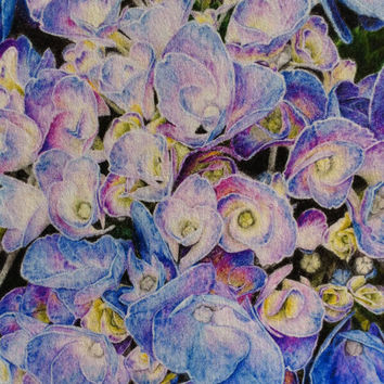 Blue Hydrangea Art Print Botanical Drawing Limited Edition Colored Pencil Floral Flowers Bloom Photo Realism