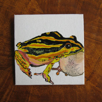 frog painting (miniature) tiny art - can be blutacked to your wall so it is easy to put up- no nails necessary- frogs