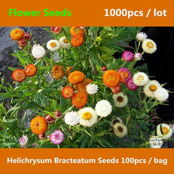 ^^Strawflower Helichrysum Bracteatum Seeds 1000pcs, Perennial Everlasting Paper Daisy Flower Seed, Hardy Annual Immortelle Seeds