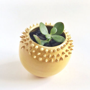 Yellow Succulent Planter - Ceramic Vessel - Spiky Planter