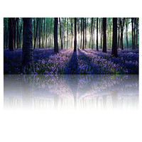 Large Size Canvas Wall Art with Frame,Lavender Forest,Mild Sunshine,Landscape Canvas Prints Art Wall Decor ,1.2 inches Thick Frame,Ready Hanging on