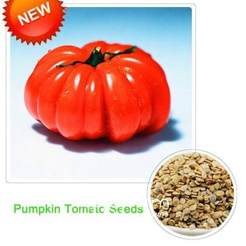 New Fresh Giant Tomato bonsai,Fruits and Vegetables Potted Pumpkin Tomato plant Balcony for Home Garden 100 flores/Pack,#5S41