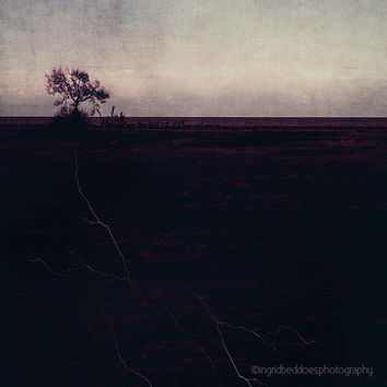 Tree photography, large wall art, lone tree, roots, landscape, nature photography, moody fine art print, ethereal wall decor, home decor