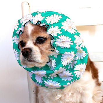 Aqua Daisy Dog Snood - Stay-Put 3 Rows Elastic Thread - Long Ear Coverup - Cavalier King Charles or Cocker Snood