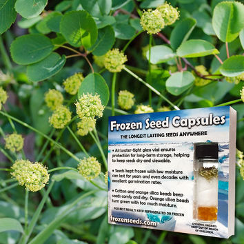 Indian Consumption Plant Seeds (Lomatium dissectum) + FREE Bonus 6 Variety Seed Pack - a $30 Value!