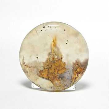 Graveyard Plume Agate Yellow Plume Agate Round Stone Cabochon