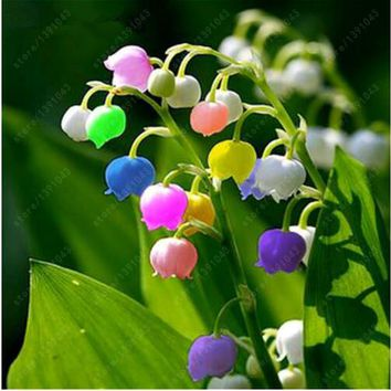 100 pcs/bag Lily of the Valley Flower Seeds , Bell Orchid Seeds,Rich Aroma ,Bonsai Balcony Flower for Home Potted Plants