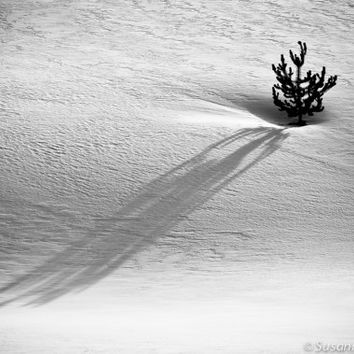 Black & White Photography, Winter Scenes, Abstracts, Minimalist, Set of 3 Photo Cards, Holidays, Christmas, Home Decor