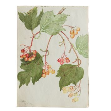 Antique Botanical Watercolor Painting