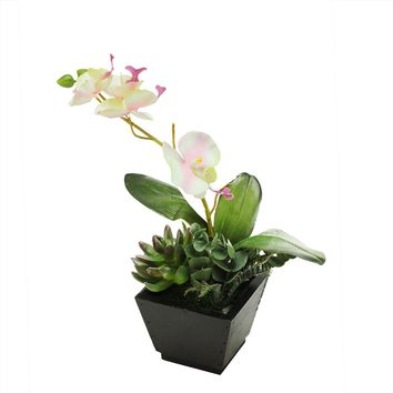"""13"""" Artificial White  Pink and Green Orchid with Succulent Plants"""