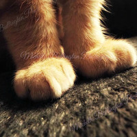 Cat Photography, Animal Photography, Cat Lover, Kitten, Cat Paw, Instant Download, Cat Wallpaper