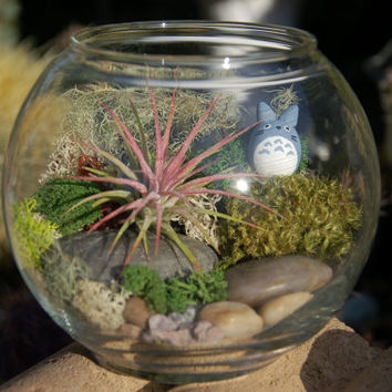 "Totoro Bowl Terrarium - ""Totoro in a Bowl"" Air Plant and Moss DIY Terrarium"