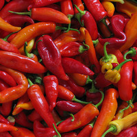 Super Chili Pepper, Compact Plant with Tons of Peppers, Garden