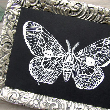 Original Moth Zentangle Illustration - Brahmaea wallichii
