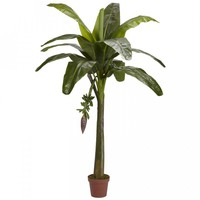 6' Banana Silk Tree (Real Touch)