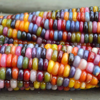 30 Rainbow Corn Seeds, Fruit Vegetables Grains and Miscellaneous Good Quality Maize Home Gardening Plants DIY