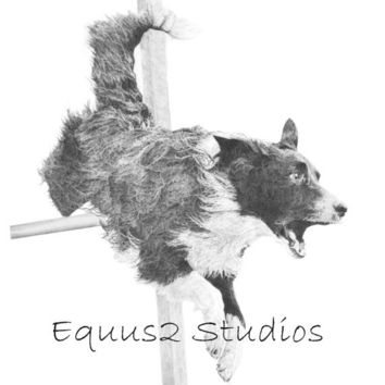 "Border Collie Art, Agility Dog Portrait, 12 x 10"" Open Edition Print of Pencil Drawing, Canine Artwork"