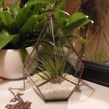 Glass Air Plant Terrarium, Large Glass Terrarium - MADE TO ORDER