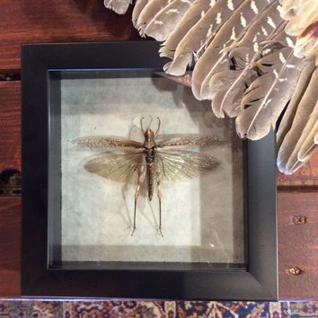 "Grasshopper in 7"" x 7"" Black Frame"