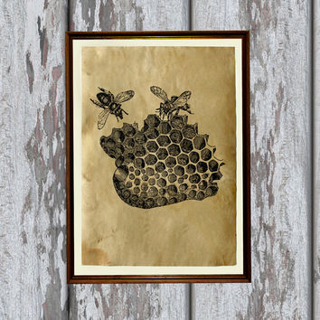 Bees illustration honeycomb print nature art Old paper home decor 8.3 x 11.7 inches