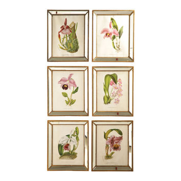 S/6 Orchids Prints Wall Art in Mirror & Antique Gold Trim Fram - default