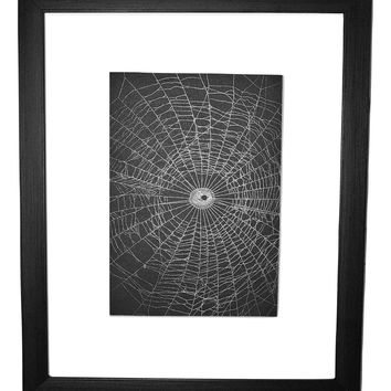 Preserved Spider Web Created by the Orchard Spider Matted or Framed
