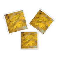Yellow autumn maple leaves. Add you text or name. Acrylic Tray