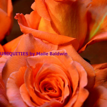 Photograph of Peach Orange Ruffling Roses, 8 x 10 inch art photo Mother's day Spring Summer home decor wall art love Anniversary gift