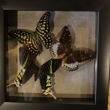 Triple Green Butterfly Collection 7 x 7 Frame