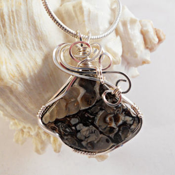 Wire Wrapped Pendant, Turritella Fossil
