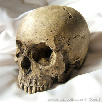 HUMAN SKULL REPLICA full size realistic replica made from plaster of Paris and painted for an aged, weathered effect