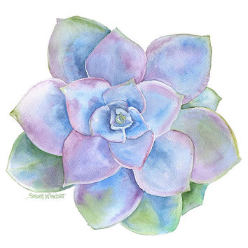 Blue Succulent Watercolor Painting - 8 x 10 - Giclee Print