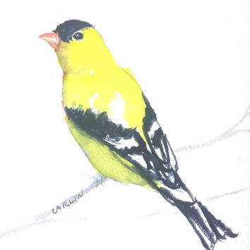 Original Watercolor, Bird painting, American Goldfinch, 5x7, yellow bird, finch watercolor, male finch original