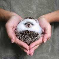 "hedgehog ""lump""... I will make this item for your order"